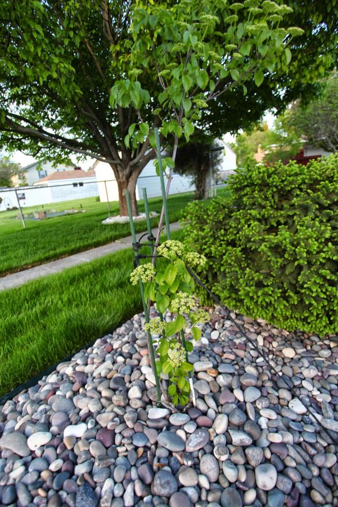 GrowingTrees